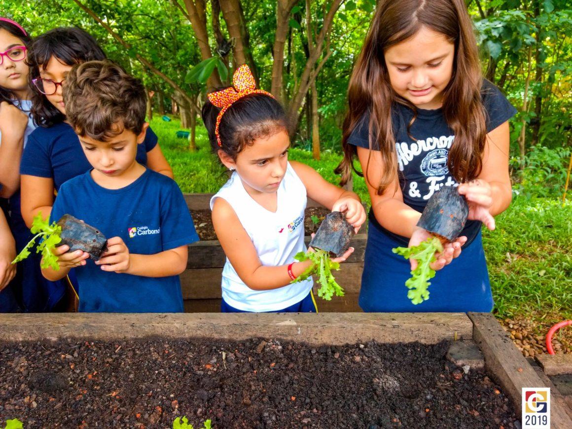 Horta do Carbonell: em contato com a natureza, turminha do Integral aprende sobre o ciclo do alimento