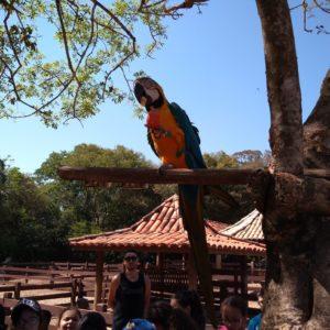 Sítio do Carroção: Ensino Fundamental curte viagem repleta de aventuras e atividades em contato com a natureza